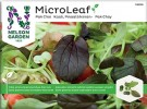 Micro Leaf Kål Pak Choy Red Wizard Nelson Garden thumbnail